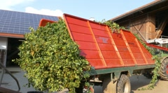 4K FHD Truck transporting ripe Hops back to Farmhouse factory Hop Harvest period Stock Footage