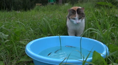 Hungry cute cat catch and eat fish from plastic bowl. Woman fish Stock Footage