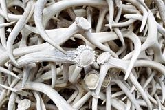 elk antlers - stock photo
