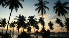 Coconut trees and sea on the sunset - stock footage