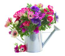 Bunch of anemone flowers Stock Photos