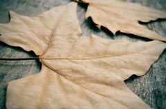 Autumn leaves on a weathered wooden background Stock Photos