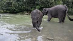Mother and baby elephant bathing in river Stock Footage