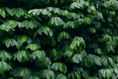 Green plants in the tropical zone, slow motion shot at 240fps Stock Footage