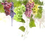 watercolor image of grapes - stock illustration