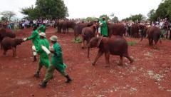 ELEPHANTS AFRICAN ORPHANS NEWBORN CALF Stock Footage