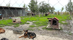 Dogs homeless in the shelter Stock Footage