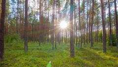 summer forest and the sun, time-lapse - stock footage