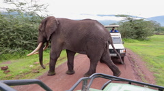 Stock Video Footage of BULL ELEPHANT AFRICAN WILDLIFE TOURISTS CLOSE ENCOUNTER