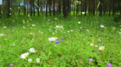 Forest flowers in summer - slider dolly shot Stock Footage
