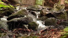 Foreststream_9151 Stock Footage