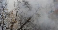 UHD 4K Dense Thick Smoke Damage Dangerous Forest Fire Firewood Destroy Heat Stock Footage