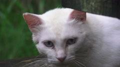 Stray White Cat Fussa Japan Close Up 4K Stock Footage