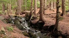 Forest stream_9144 - stock footage
