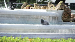 Dove bathed in the fountain Stock Footage