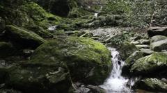 Bush stone brook Stock Footage