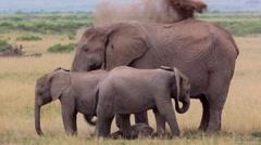 ELEPHANTS AFRICAN WILDLIFE BABY CALF NEWBORN Stock Footage