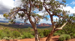 Distant Cathedral Rock Seen Through Juniper Tree- Sedona AZ - stock footage