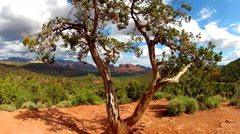 Cathedral Rock Seen Through Juniper Tree Zoom- Sedona AZ Stock Footage