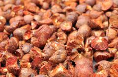 dried betel nut or areca nut - stock photo