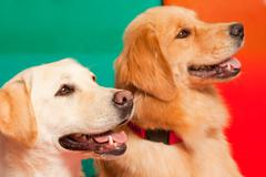 Trained dogs for assisted therapy Stock Photos