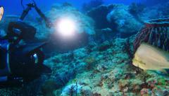 Scuba diver shooting a fish in the Andaman Sea Stock Footage