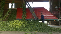 4K FHD Worker put Hops onto Hop picking Machine Stock Footage