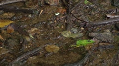 Water Muck Stock Footage
