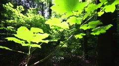 Pan shot from forest idyll in the sunlight Stock Footage