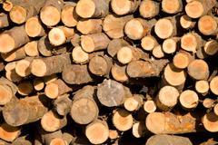pile of trunks - stock photo