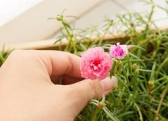 Collect flower . Stock Photos