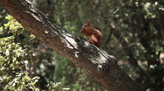 Squirrel eating nuts that gave girl. She sitting on the tree Stock Footage