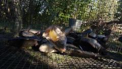 Stock Video Footage live fish poured out of the cage carp Stock Footage