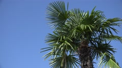 ULTRA HD 4K Closeup palm tree green leaf blue sky blow windy day tropical island Stock Footage