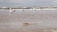 Gulls on beach Stock Footage