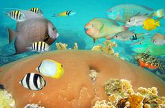 Tropical underwater life with colorful coral fish Kuvituskuvat