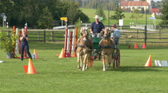 4K FHD Sport Athlete drawing competing Horse Cart in green field Stock Footage