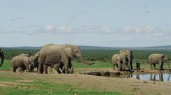 4K+ R3D - African Elephant - herd arrives at waterhole. Safari wild uhd animal - stock footage