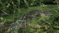Rack Focus Between Grass and Creek Stock Footage