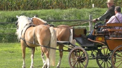 Slow Motion Sport Athlete Horse Cart riding competition Stock Footage