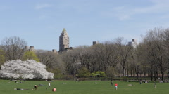 Spring Season New York City NYC Central Park Cherry Trees Family People Relaxing Stock Footage