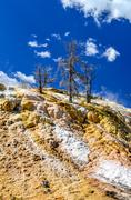 scenic view of geothermal land and dry trees in yellowstone np - stock photo