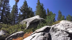 Mountain forest, man searching Stock Footage