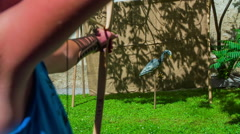 Shot with a bow in artificial animal Stock Footage