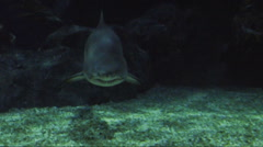 A shark is swimming under dark water Stock Footage