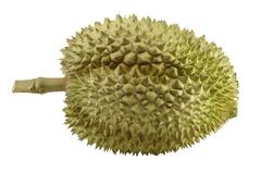 durian, the king of fruit of south east asia isolated on white - stock photo