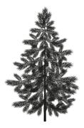 Christmas spruce fir tree silhouette Stock Illustration