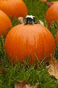 organic orange pie pumpkin - stock photo