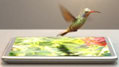 Tablet pc and humming-bird Stock Footage