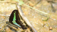 Green butterfly fly away Stock Footage